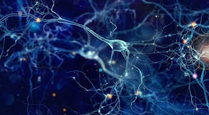 Neuroplasticità sinaptica e processi educativi. La prospettiva neuropedagogica